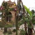 Mục sở thị cây chuối hơn 300 nãi