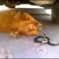 Chết hài với cuộc chiến rắn mèo.