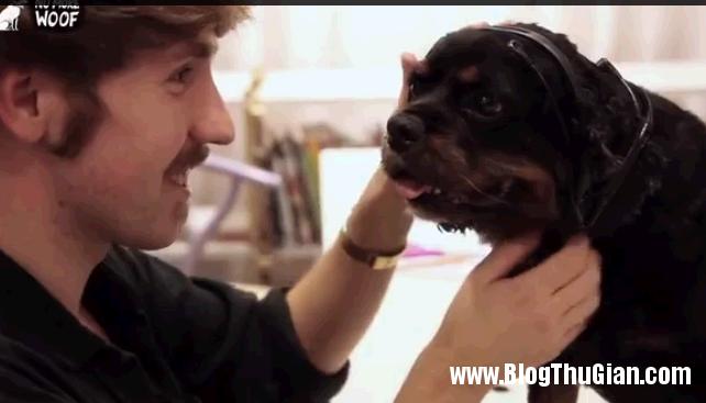 chonoitiengnguoi2 Phát minh máy giúp chó nói tiếng người