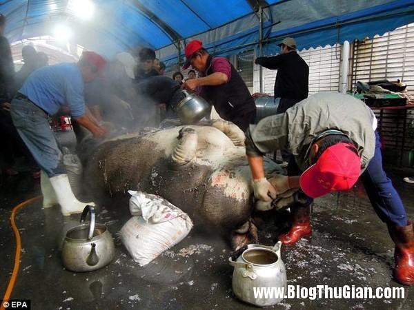 than lon khong lo nang ngot nghet 1 tan2 Ngôi vị quán quân  Thần lợn đã thuộc về chú lợn nặng gần 1 tấn.