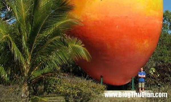 xoai bai Dùng cần cẩu trộm quả xoài nặng 7 tấn ở Úc