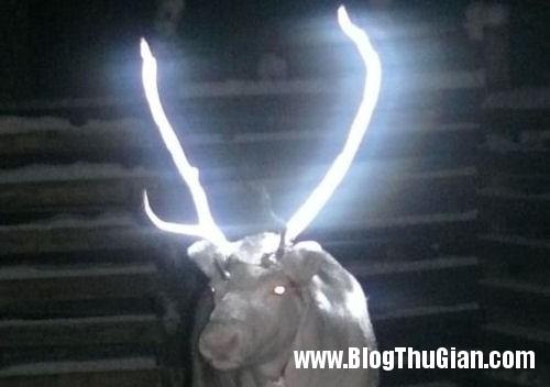1394072726 finnish reindeer Tuần lộc có chiêc sừng phát sáng.