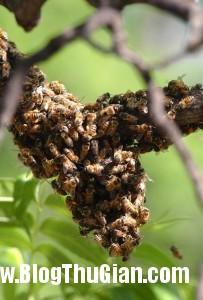 914bd1d1 588a 4089 a4b0 cd9abac661ee jpg1 203x300 Bị 75.000 con ong đốt 1.000 chỗ trên cơ thể được cố gắng.