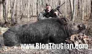 bat duoc quai vat lon rung khong lo nang 227kg 300x175 Săn được quái vật rừng nặng hơn 220kg