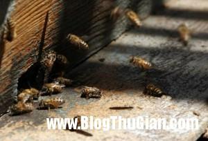 cab12b67 d7f1 4464 b7b5 c5a45f37ce36 jpg0 300x204 Bị 75.000 con ong đốt 1.000 chỗ trên cơ thể được cố gắng.