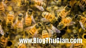 f0bc7d57 be36 4ea7 9b1a fca9f05a6416 jpg2 300x168 Bị 75.000 con ong đốt 1.000 chỗ trên cơ thể được cố gắng.