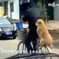 Hài chó ngồi sau xe như người lớn