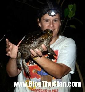 140401 2coc ae892 277x300 Xuất hiện con ếch khổng lồ như em bé.