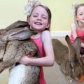 Bunny-Main-1-3433520-4757-1398131372