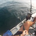 Câu ngầm ngay cá mập, nguy hiêm vãi đái :)