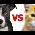 Sự khác biệt giữa chó vs mèo .Cười đau cả bụng