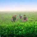 [OFFICIAL MV] Anh Sợ Mất Em – The Men, đẹp quá