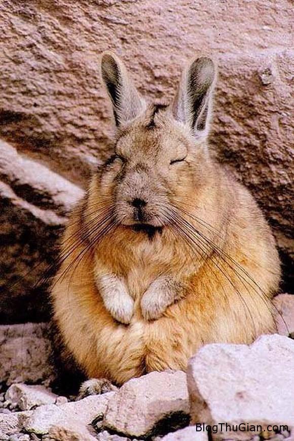 140610 3chuot f9dac Chú chuột có thân hình thỏ con đáng yêu