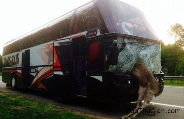 140619 1dam a5d75 Chú nai đâm nát cả cửa kính xe bus hai tầng