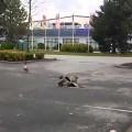 Cuộc chiến không hồi kết và kết thúc bất ngờ của 2 chú vịt