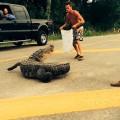Đừng có mà nhờn với cá sấu