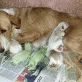 green-puppies-in-Spain-June-2014-9578b