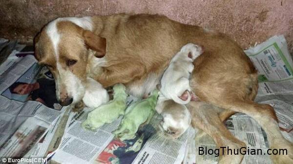 green puppies in Spain June 2014 9578b Hai chú chó chào đời với bộ lông màu xanh