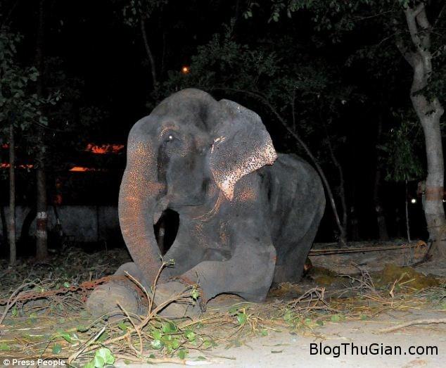 1 d9034 Cảm động giọt nước mắt của chú voi bị giam cầm suốt 50 năm