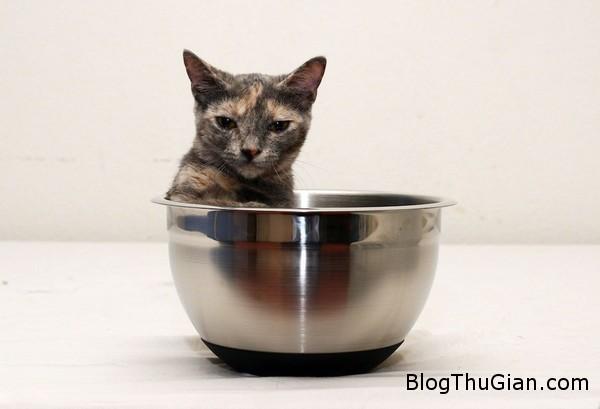 140630 2meo f2bf2 Chú mèo nhỏ nhất thế giới chỉ bằng lon nước ngọt