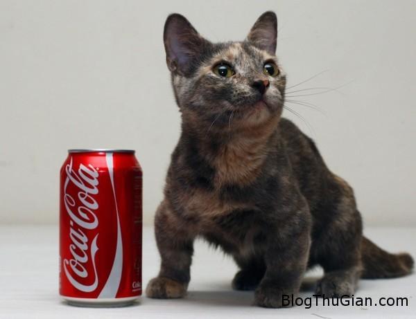 140630 3meo f2bf2 Chú mèo nhỏ nhất thế giới chỉ bằng lon nước ngọt