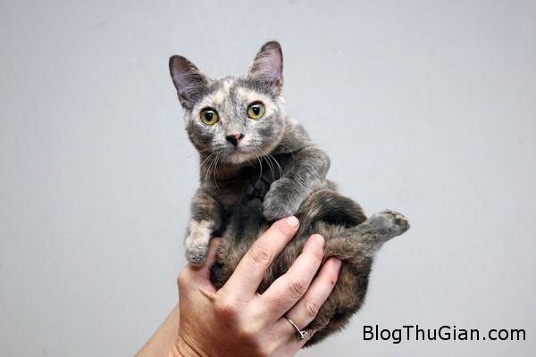 140630 4meo f2bf2 Chú mèo nhỏ nhất thế giới chỉ bằng lon nước ngọt