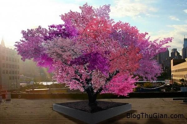 140723 1cay b40891 Loại cây kỳ lạ có tên gọi Cây 40 trái