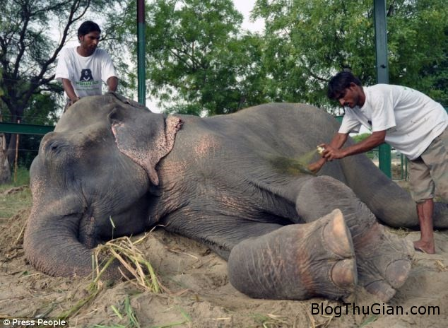 cat3 d9034 Cảm động giọt nước mắt của chú voi bị giam cầm suốt 50 năm