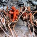 corpse1-1d2b4