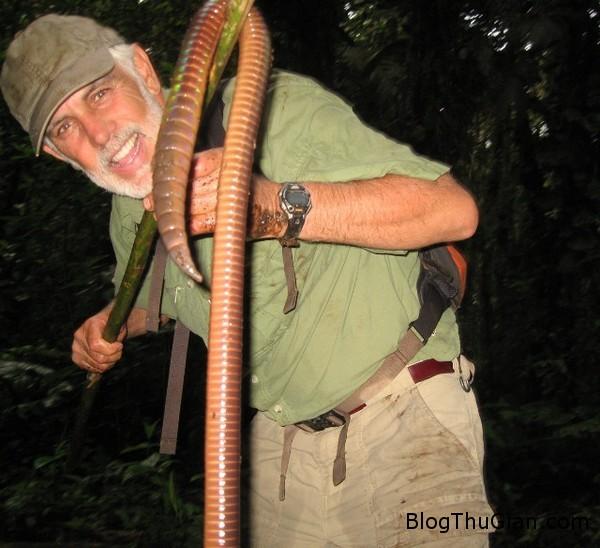 giant worm 3 356f9 Bắt được con giun đất có trọng lượng hơn 500g