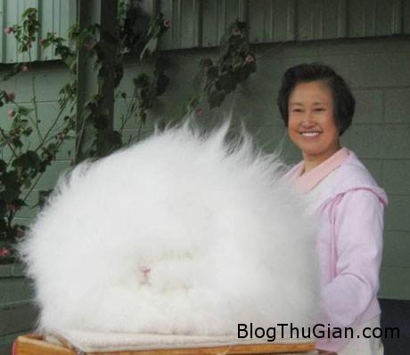 ida1 9edcb Chú thỏ có bộ lông đẹp nhất thế giới