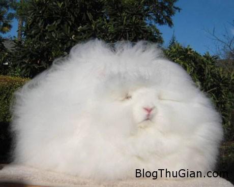 ida2 9edcb Chú thỏ có bộ lông đẹp nhất thế giới