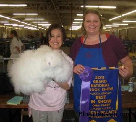 ida3 9edcb Chú thỏ có bộ lông đẹp nhất thế giới