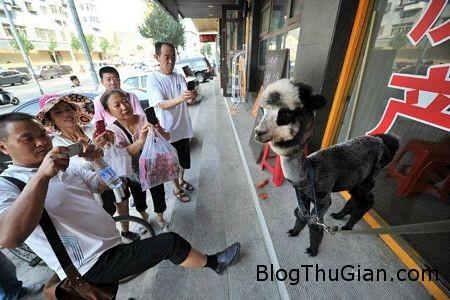tn 4 37c7a Lạc đà lai gấu trúc xuất hiện ở Trung Quốc