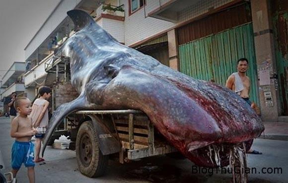 140804 3ca 18b61 Quái vật biển nặng hai tấn được rao bán tại chợ đầu mối