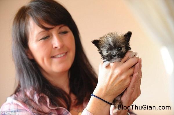 140822 2cho 3ce5b Ngắn nhìn vẻ đáng yêu của chú chó nhỏ nhất nước Anh