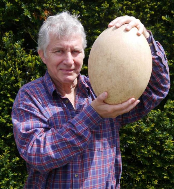 140824 1trung 8bb0e Đấu giá trứng hóa thạch khổng lồ có chiều cao 30cm