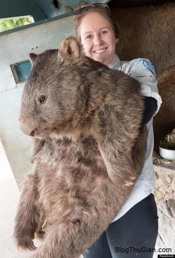 140827 2gau 23418 Gấu túi sống tới 29 năm vẫn chưa tìm được bệnh tình