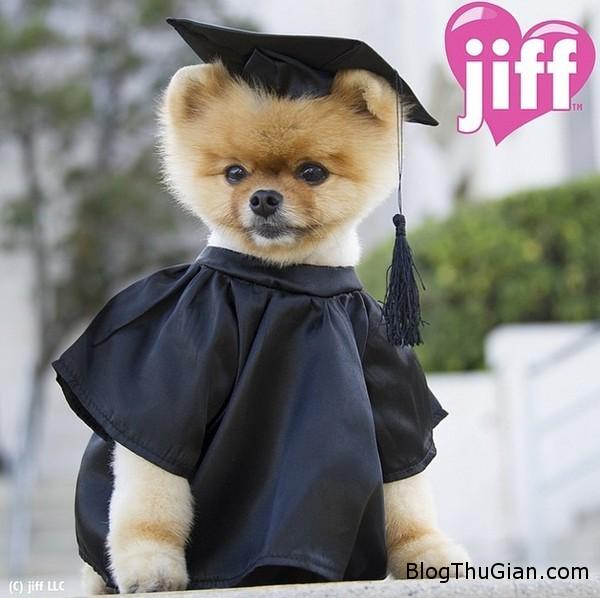 140828 11cho 00458 Chú chó đi bằng hai chân nổi tiếng nhất thế giới