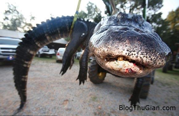 538b299eded1abf9c543b0a6957db6 Tóm gọn quái vật cá sấu gần 500kg sau 2 ngày mai phục