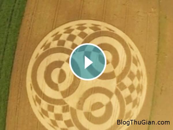 Untitled Phát hiện vòng tròn bí mật trên cánh đồng lúa mạch