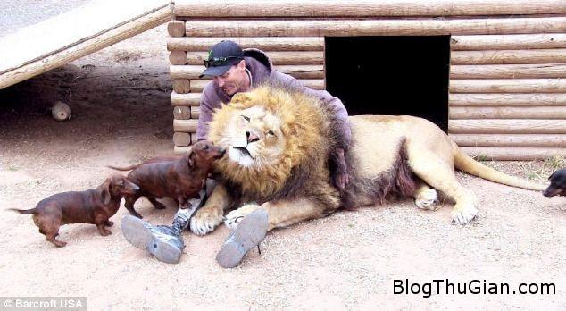 h1 Tình bạn thân thiết đặc biệt giữa chú sư tử Bonedigger và chú chó Milo