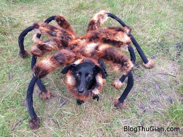 140905 1chonhen ab7ee Cờn hó hóa nhện nhát người đi đường.