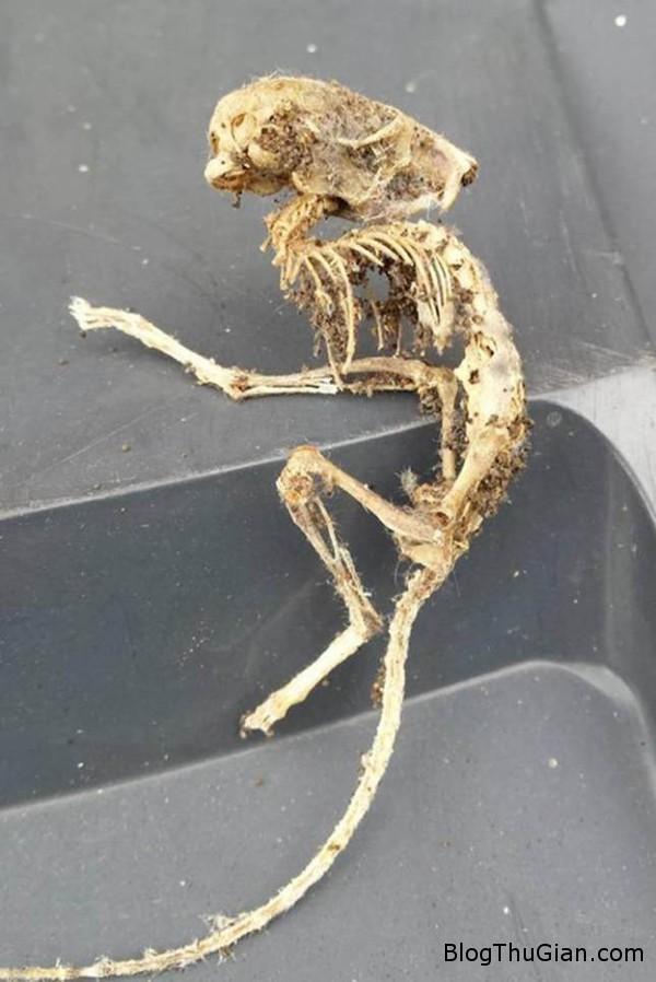 140918 1ng 4496a Tìm thấy xác chết sinh vật lạ dài 15cm có hình dáng giống những con quái vật ngoài hành tinh