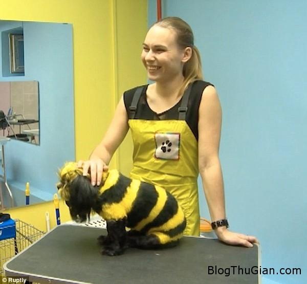 140920 2salon 97c49 Salon tóc dành riền cho thú cưng tại Nga