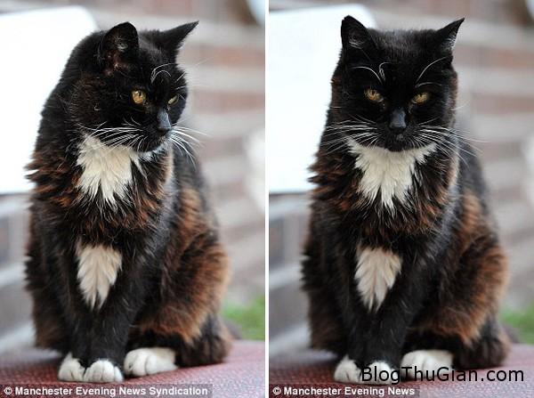 140922 2meo c5687 Cô mèo sống được hơn 115 tuổi
