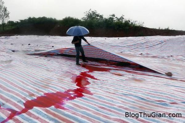 140922 2song caf2e Vùng đất bất ngờ chuyển màu kèm theo những vũng nước đỏ như máu sau trận mưa rào lớn.