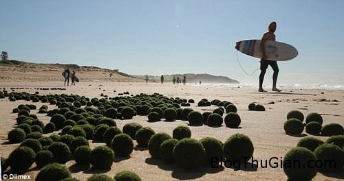 1411369138 article 2763283 21820e8f00000578 270 634x335 trứng người ngoài hành tinh xuất hiện trên bãi biển Sydney