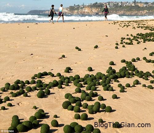 1411369168 article 2763283 21820e7000000578 194 634x548 trứng người ngoài hành tinh xuất hiện trên bãi biển Sydney