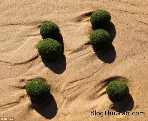 1411369189 article 2763283 2182100a00000578 686 634x520 trứng người ngoài hành tinh xuất hiện trên bãi biển Sydney